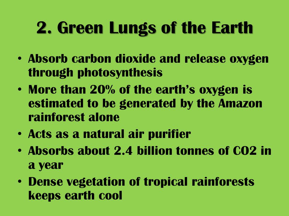 2. Green Lungs of the Earth Absorb carbon dioxide and release oxygen through photosynthesis More than 20% of the earth's oxygen is estimated to be gen