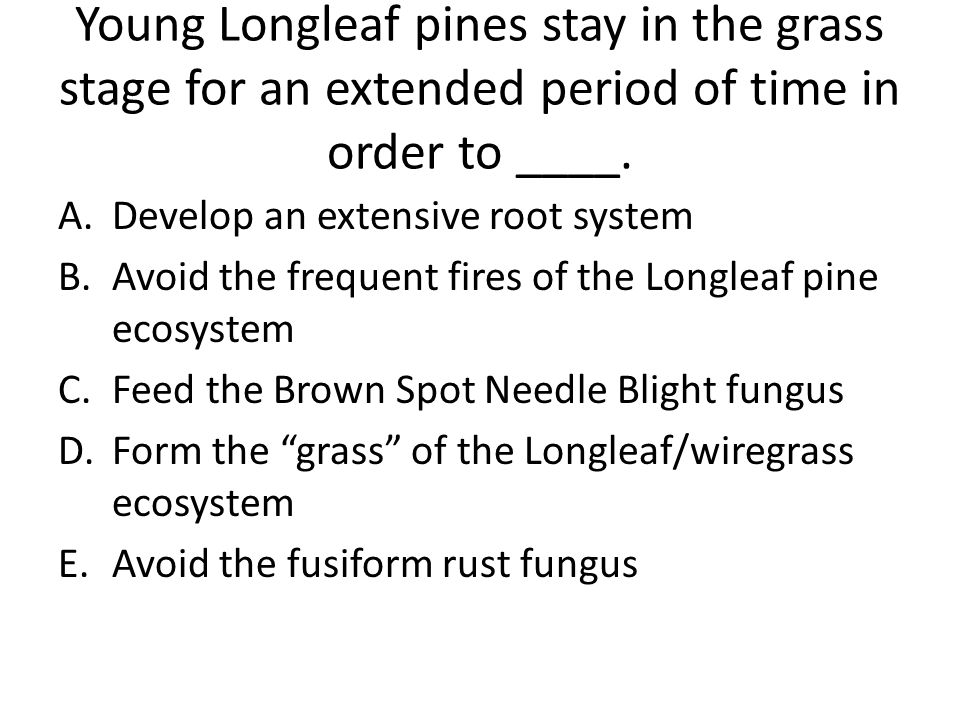 Young Longleaf pines stay in the grass stage for an extended period of time in order to ____. A.Develop an extensive root system B.Avoid the frequent