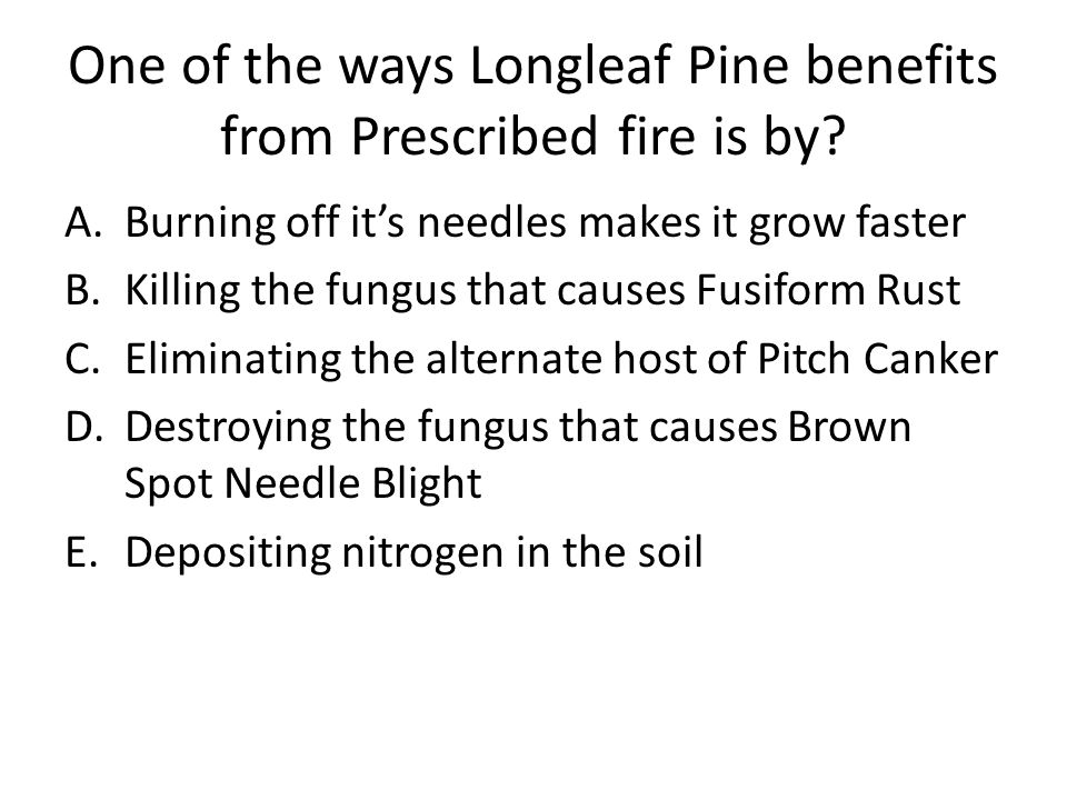 One of the ways Longleaf Pine benefits from Prescribed fire is by? A.Burning off it's needles makes it grow faster B.Killing the fungus that causes Fu