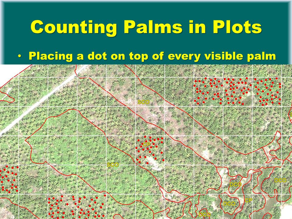 Counting Palms in Plots Placing a dot on top of every visible palm Placing a dot on top of every visible palm Digital overlay with grid and counting in MapInfo (GIS software) dots per grid cell Digital overlay with grid and counting in MapInfo (GIS software) dots per grid cell Transfer to Access Transfer to Access
