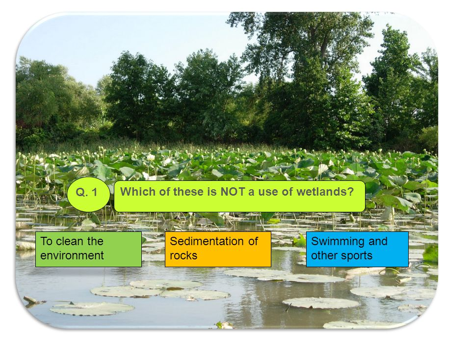 Which of these is NOT a use of wetlands? Q. 1 To clean the environment Sedimentation of rocks Swimming and other sports