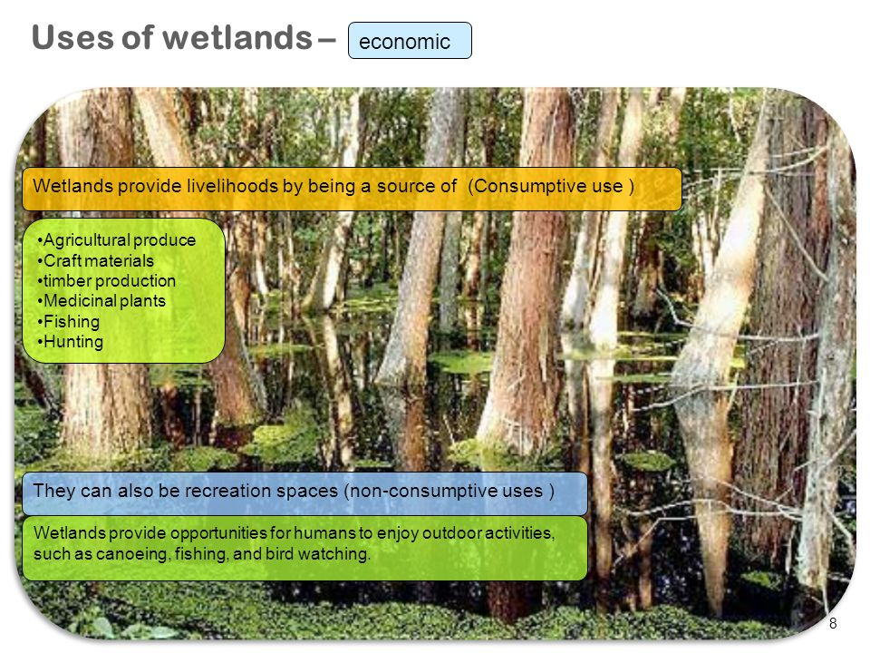 8 Uses of wetlands – Wetlands provide livelihoods by being a source of (Consumptive use ) They can also be recreation spaces (non-consumptive uses ) A