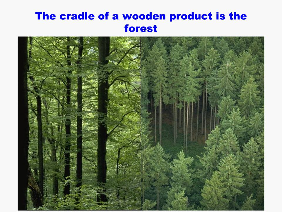  B. Zimmer / H. Schwaiger The cradle of a wooden product is the forest