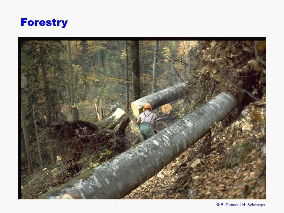  B. Zimmer / H. Schwaiger Forestry
