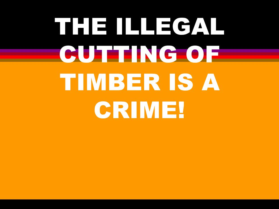 FOREST CRIME &