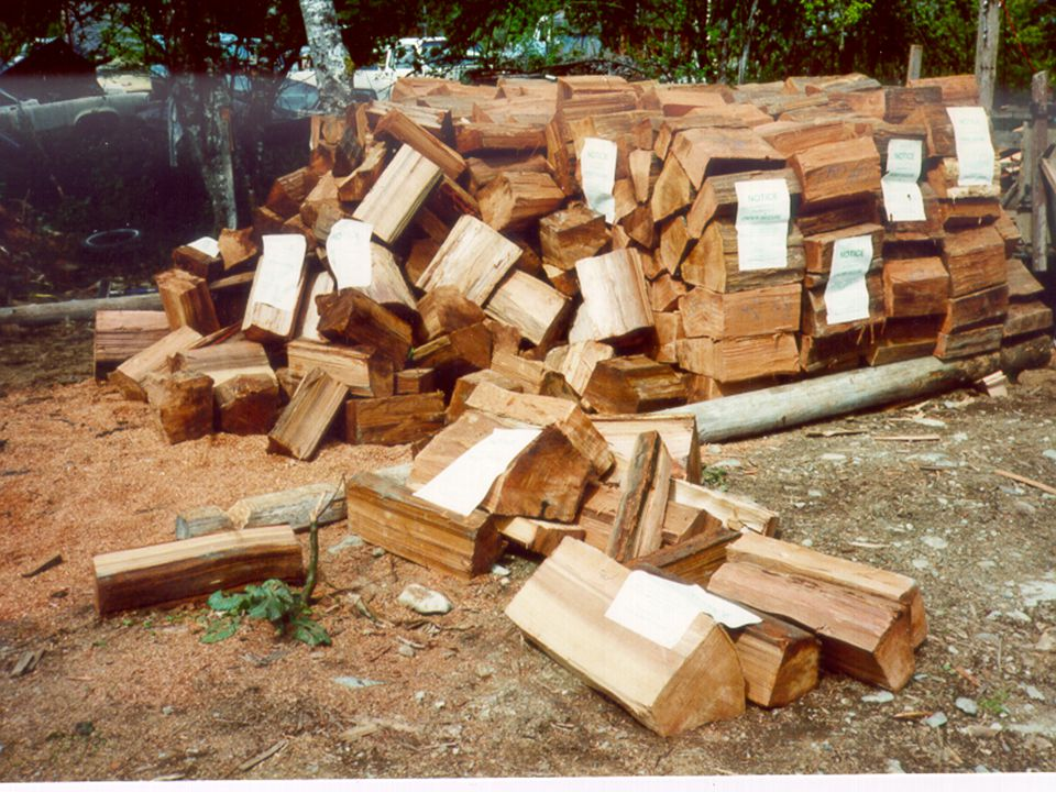 THE ILLEGAL CUTTING OF TIMBER IS A CRIME!