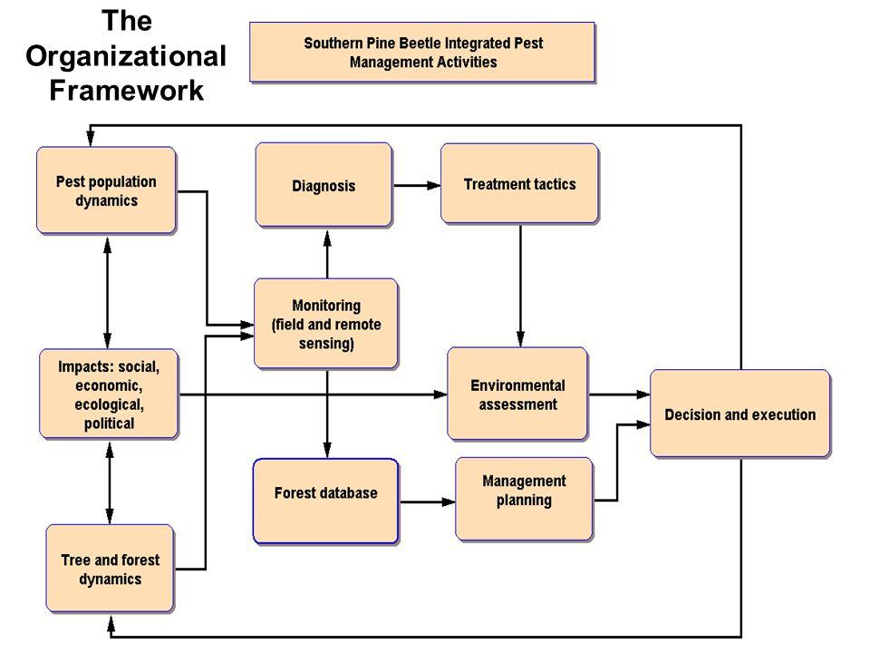 The Organizational Framework