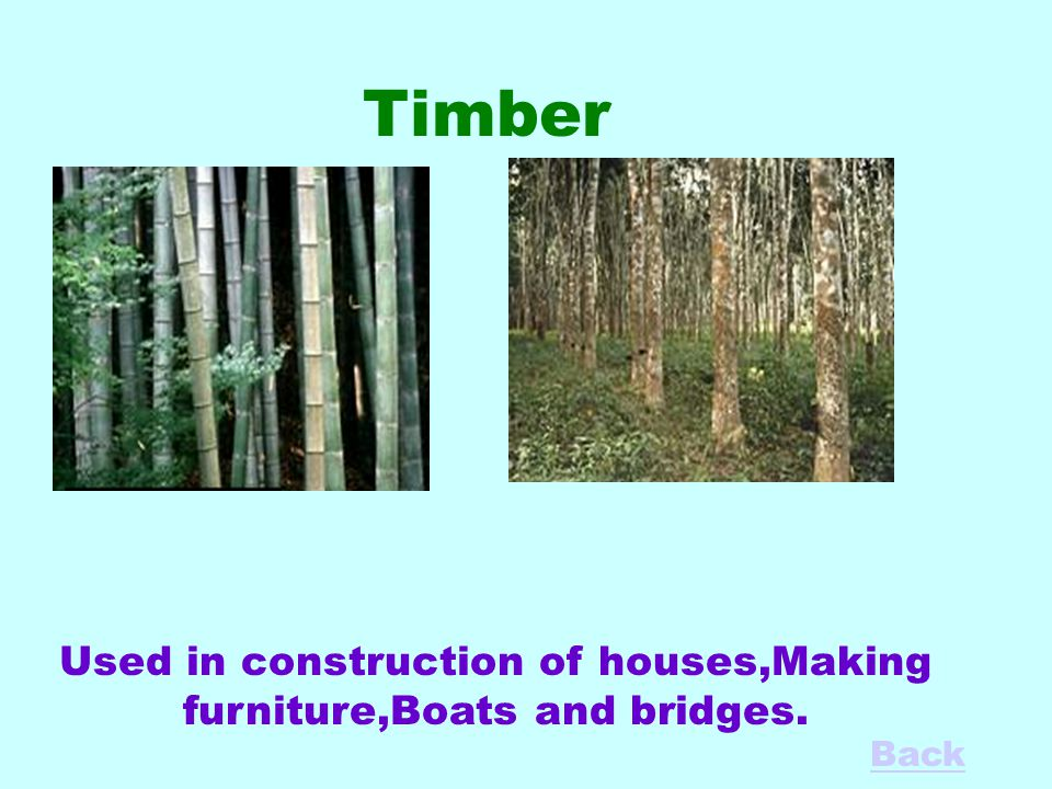 Timber Used in construction of houses,Making furniture,Boats and bridges. Back