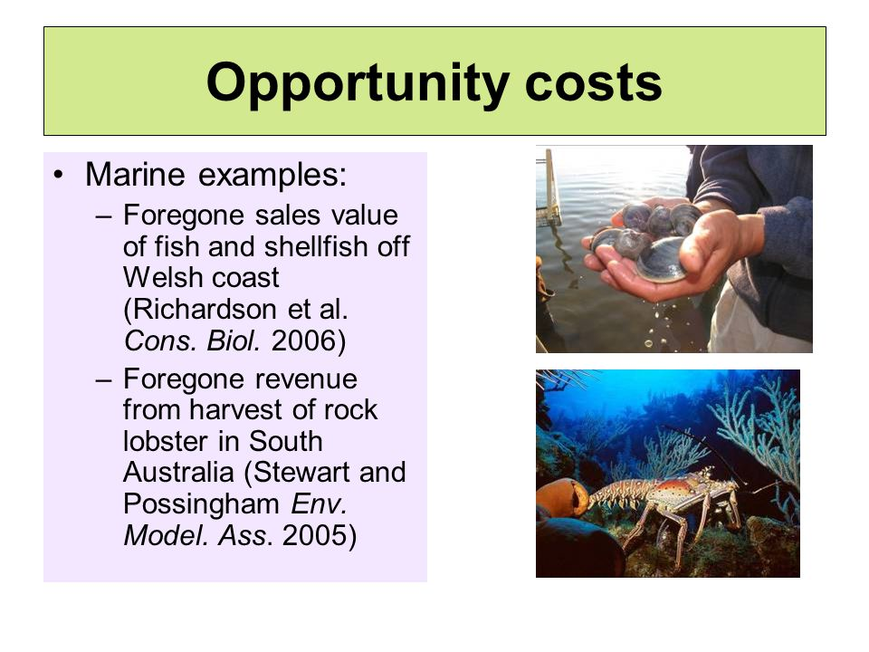 Opportunity costs Marine examples: –Foregone sales value of fish and shellfish off Welsh coast (Richardson et al.