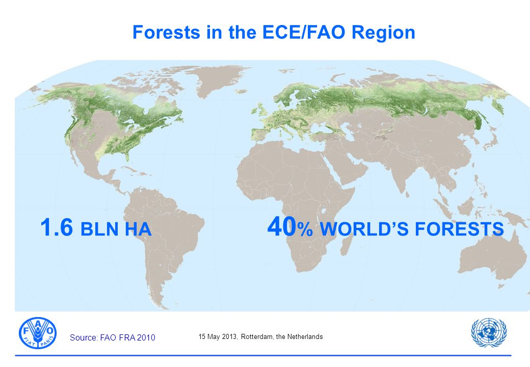 15 May 2013, Rotterdam, the Netherlands Forests in the ECE/FAO Region 1.6 BLN HA 40 % WORLD'S FORESTS Source: FAO FRA 2010