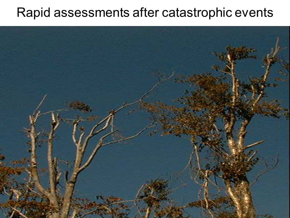 9 Rapid assessments after catastrophic events