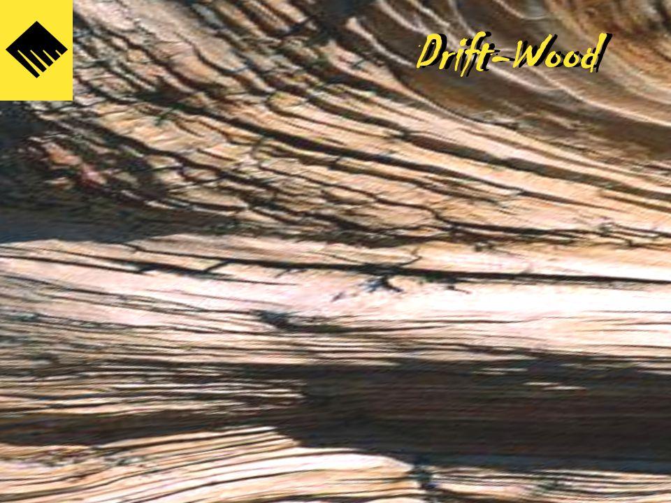 Drift-Wood