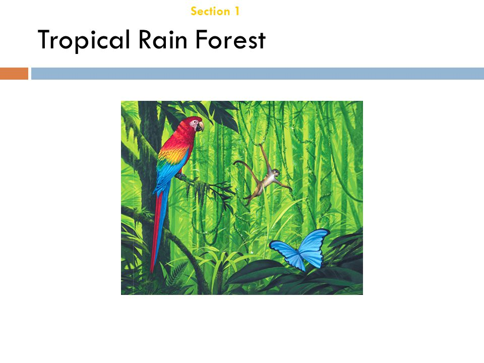 Species Richness  Highest of all biomes- contain about ½ of the worlds species!  One hectar of tropical rain forest – 300 species of trees.  Monkey