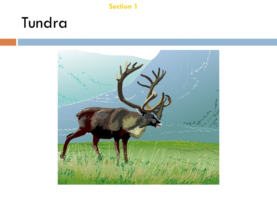 Chapter 21 Tundra Section 1 Terrestrial Biomes