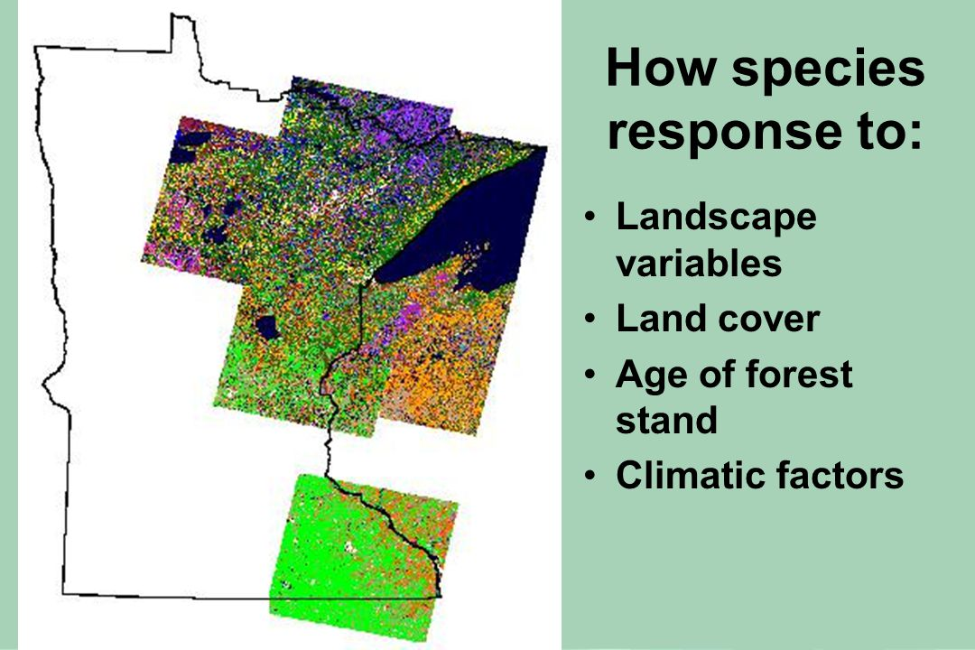 How species response to: Landscape variables Land cover Age of forest stand Climatic factors