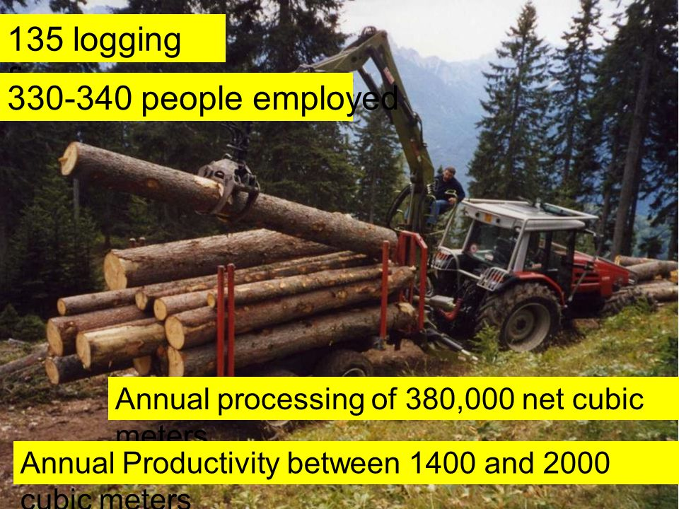 135 logging firms 330-340 people employed Annual processing of 380,000 net cubic meters Annual Productivity between 1400 and 2000 cubic meters