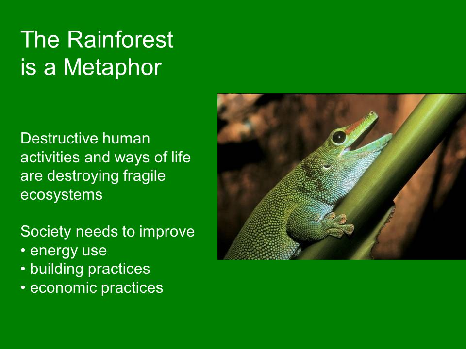 The Rainforest is a Metaphor Destructive human activities and ways of life are destroying fragile ecosystems Society needs to improve energy use build