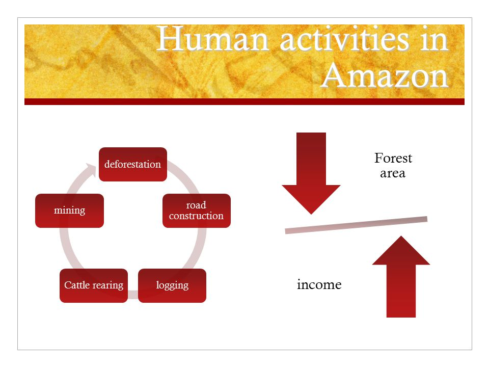 Human activities in Amazon deforestation road construction loggingCattle rearingmining Forest area income