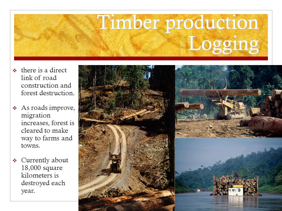 Timber production Logging  there is a direct link of road construction and forest destruction.