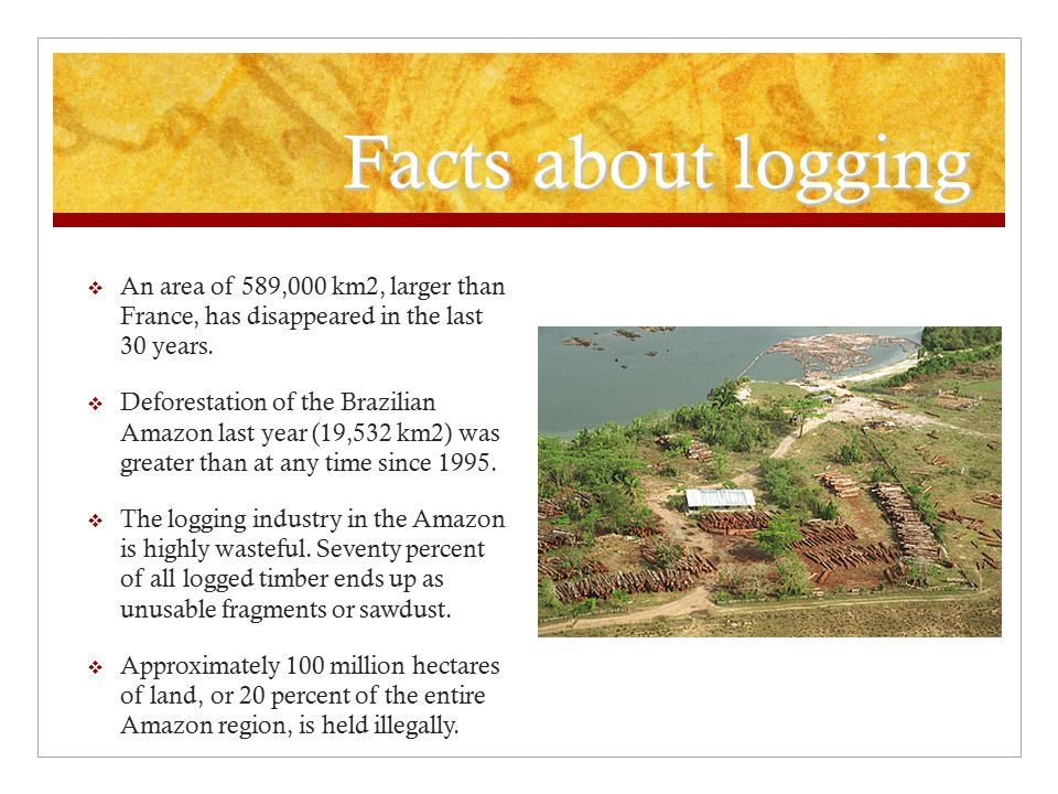 Facts about logging  An area of 589,000 km2, larger than France, has disappeared in the last 30 years.