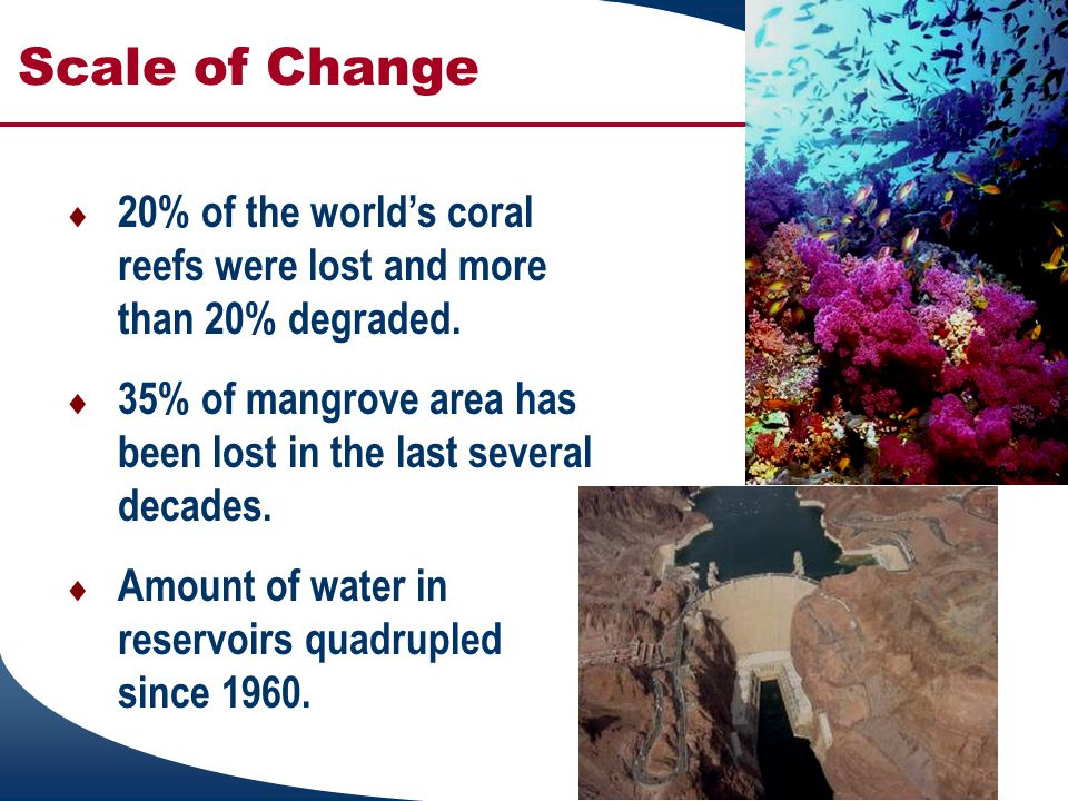 Scale of Change  20% of the world's coral reefs were lost and more than 20% degraded.  35% of mangrove area has been lost in the last several decade