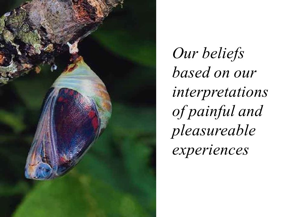 Our beliefs based on our interpretations of painful and pleasureable experiences