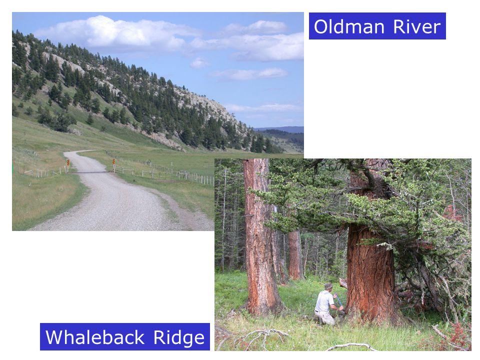 Oldman River Whaleback Ridge
