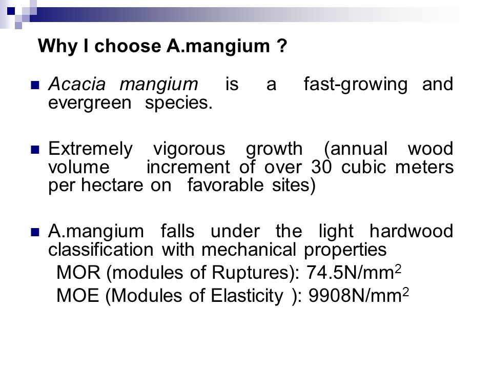 Why I choose A.mangium . Acacia mangium is a fast-growing and evergreen species.