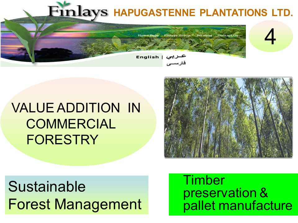 Timber preservation & pallet manufacture Sustainable Forest Management VALUE ADDITION IN COMMERCIAL FORESTRY 4 HAPUGASTENNE PLANTATIONS LTD.