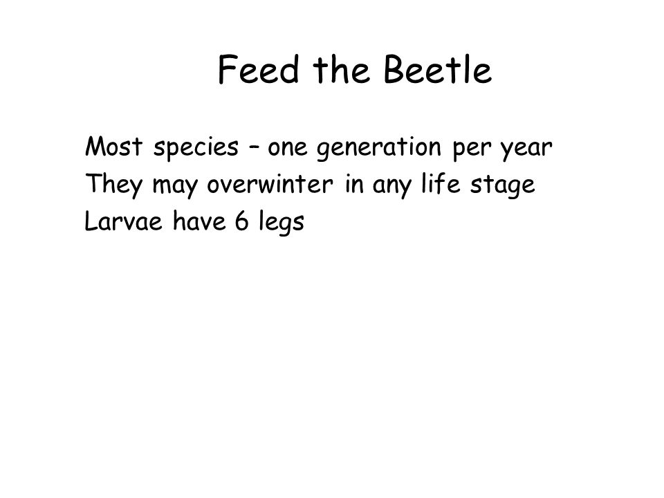 Feed the Beetle Most species – one generation per year They may overwinter in any life stage Larvae have 6 legs