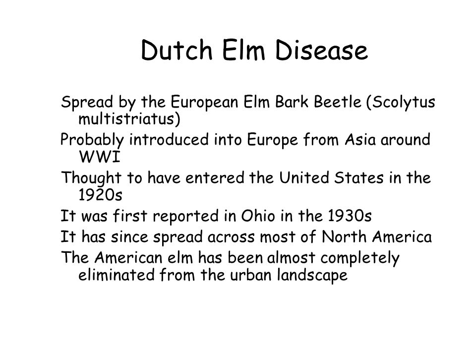 Dutch Elm Disease Spread by the European Elm Bark Beetle (Scolytus multistriatus) Probably introduced into Europe from Asia around WWI Thought to have