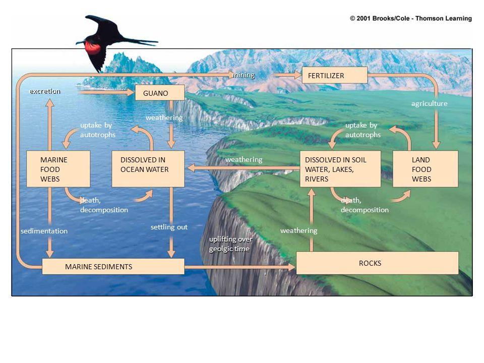 Hydrogen sulfide (H 2 S) + Water (H 2 O) Sulfur dioxide (SO 2 ) and Sulfur trioxide (SO 3 ) Dimethyl (DMS) Industries Sulfuric acid (H 2 SO 4 ) Oceans + Ammonia (NH 2 ) + Oxygen (O 2 ) Ammonium sulfate [(NH 4 ) 2 SO 4 ] Animals Plants Sulfate salts (SO 4 2- ) Hydrogen sulfide (H 2 S) Decaying organisms Sulfur (S) Fog and precipitation (rain, snow) Aerobic conditions in soil and water Anaerobic conditions in soil and water Volcanoes and hot springs Atmosphere