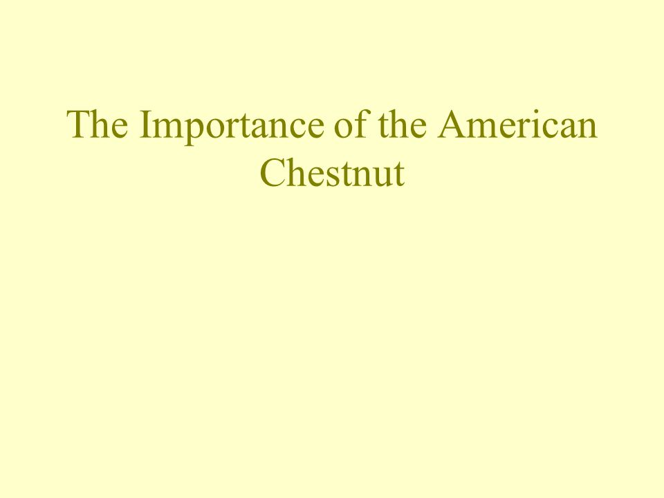 Student Objectives Sunday, May 03, 2015 After today's lesson, you will be able to: Gain an understanding of the ecological importance of the American chestnut tree and; Realize the significance of the loss of the American chestnut tree population.