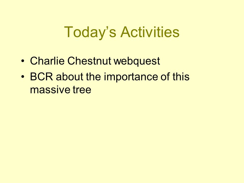 Today's Activities Charlie Chestnut webquest BCR about the importance of this massive tree