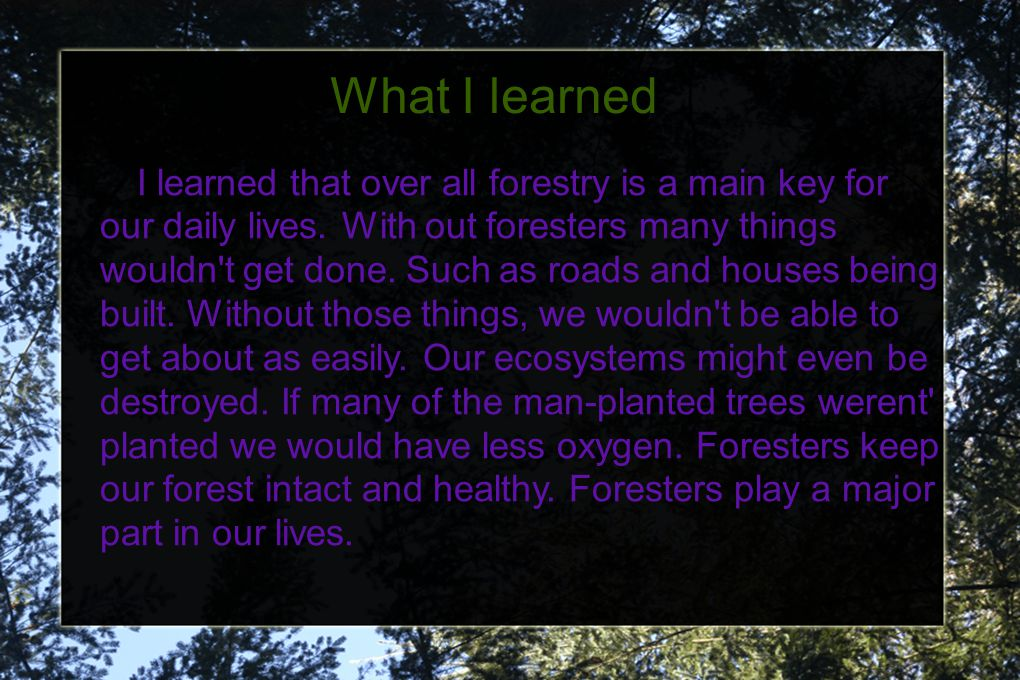 What I learned I learned that over all forestry is a main key for our daily lives. With out foresters many things wouldn't get done. Such as roads and