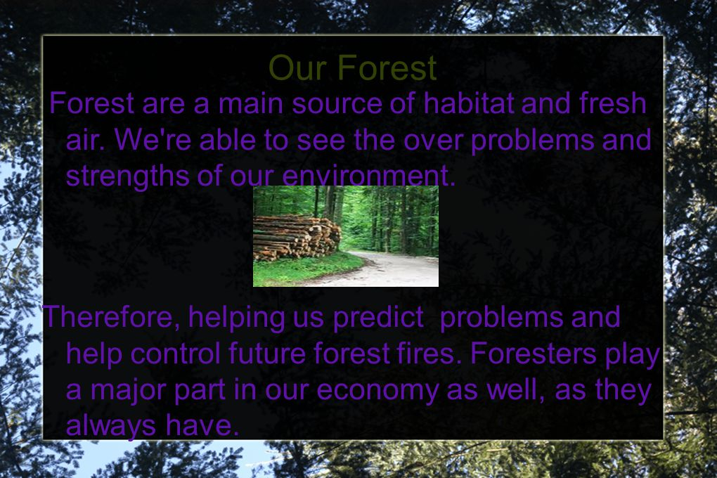 Our Forest Forest are a main source of habitat and fresh air. We're able to see the over problems and strengths of our environment. Therefore, helping