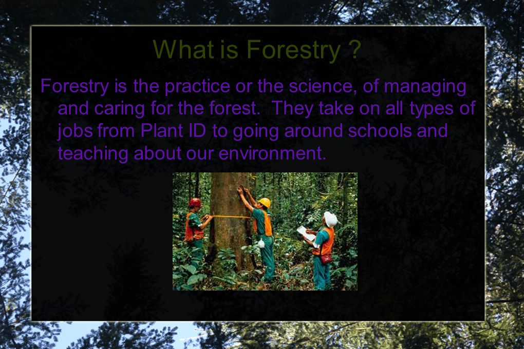 What is Forestry . Forestry is the practice or the science, of managing and caring for the forest.