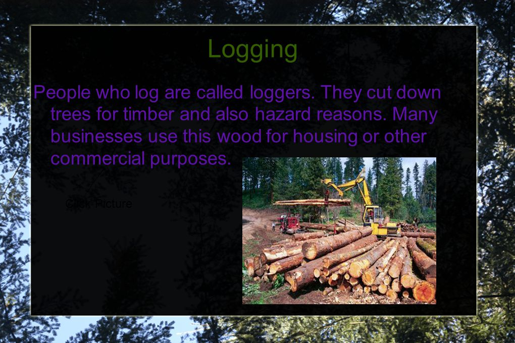 Logging People who log are called loggers. They cut down trees for timber and also hazard reasons. Many businesses use this wood for housing or other