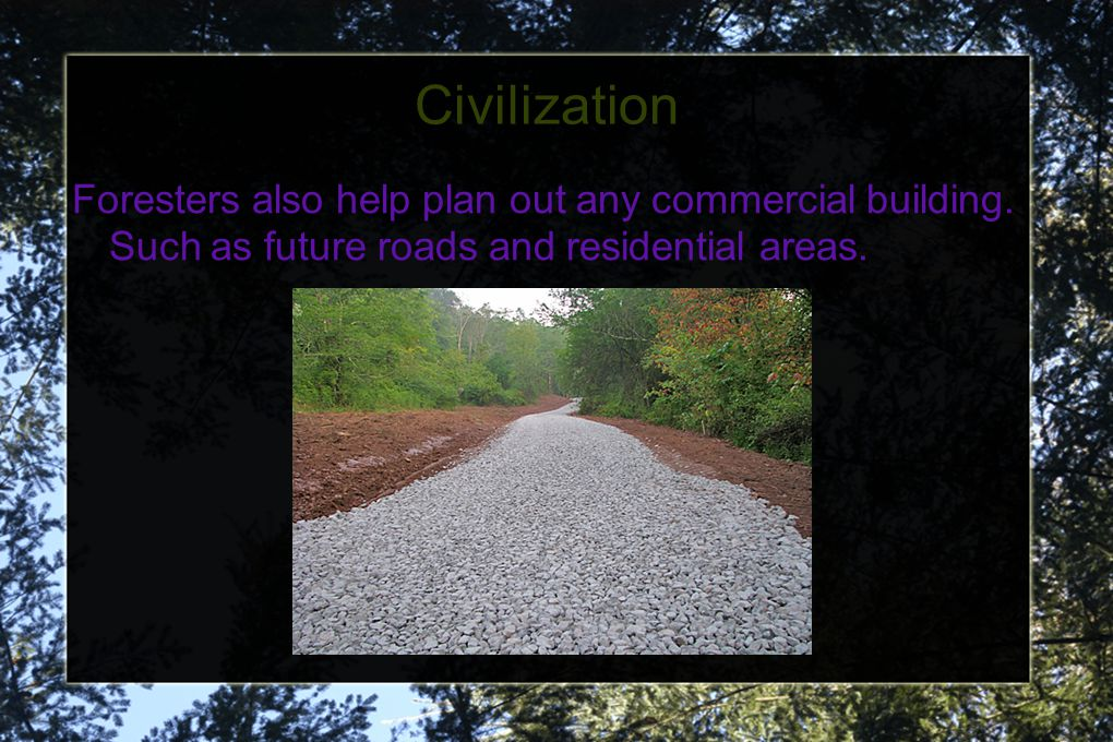 Civilization Foresters also help plan out any commercial building. Such as future roads and residential areas.