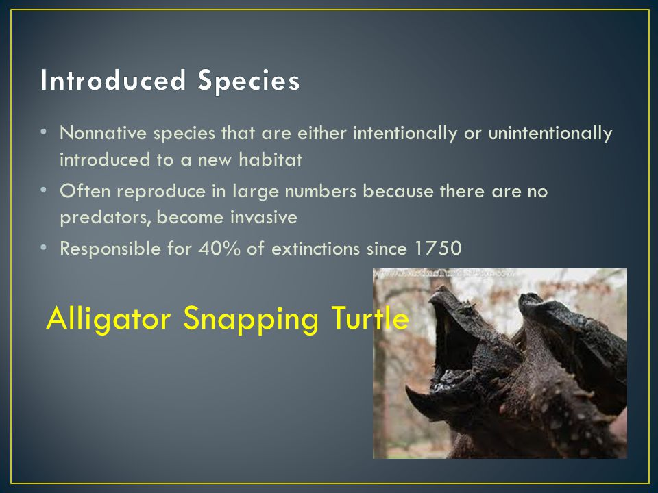 Nonnative species that are either intentionally or unintentionally introduced to a new habitat Often reproduce in large numbers because there are no p
