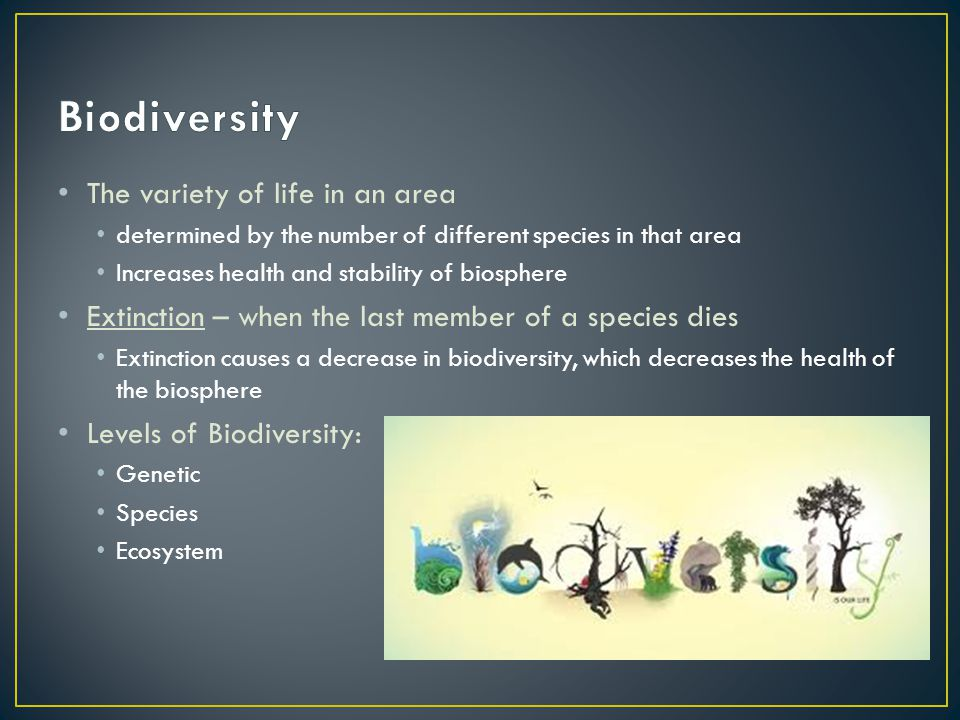 The variety of life in an area determined by the number of different species in that area Increases health and stability of biosphere Extinction – whe
