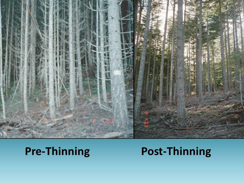Pre-ThinningPost-Thinning