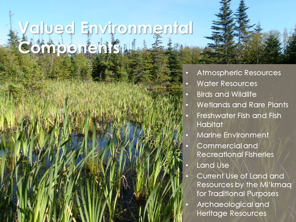 Valued Environmental Components Atmospheric Resources Water Resources Birds and Wildlife Wetlands and Rare Plants Freshwater Fish and Fish Habitat Mar