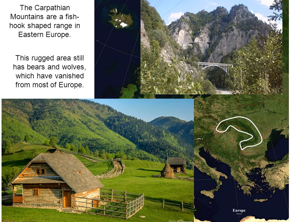 The Carpathian Mountains are a fish- hook shaped range in Eastern Europe. This rugged area still has bears and wolves, which have vanished from most o