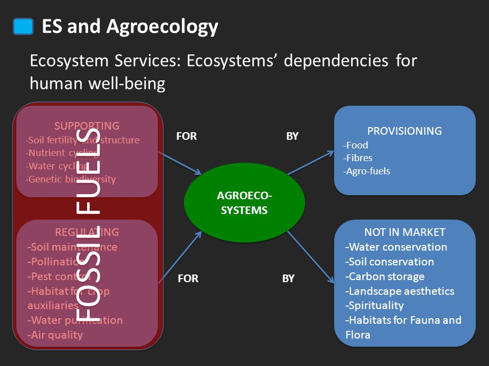 ES and Agroecology Ecosystem Services: Ecosystems' dependencies for human well-being SUPPORTING -Soil fertility and structure -Nutrient cycling -Water cycling -Genetic biodiversity SUPPORTING -Soil fertility and structure -Nutrient cycling -Water cycling -Genetic biodiversity REGULATING -Soil maintenance -Pollination -Pest control -Habitat for crop auxiliaries -Water purification -Air quality REGULATING -Soil maintenance -Pollination -Pest control -Habitat for crop auxiliaries -Water purification -Air quality AGROECO- SYSTEMS PROVISIONING -Food -Fibres -Agro-fuels PROVISIONING -Food -Fibres -Agro-fuels NOT IN MARKET -Water conservation -Soil conservation -Carbon storage -Landscape aesthetics -Spirituality -Habitats for Fauna and Flora NOT IN MARKET -Water conservation -Soil conservation -Carbon storage -Landscape aesthetics -Spirituality -Habitats for Fauna and Flora FOR BY FOSSIL FUELS FOR BY