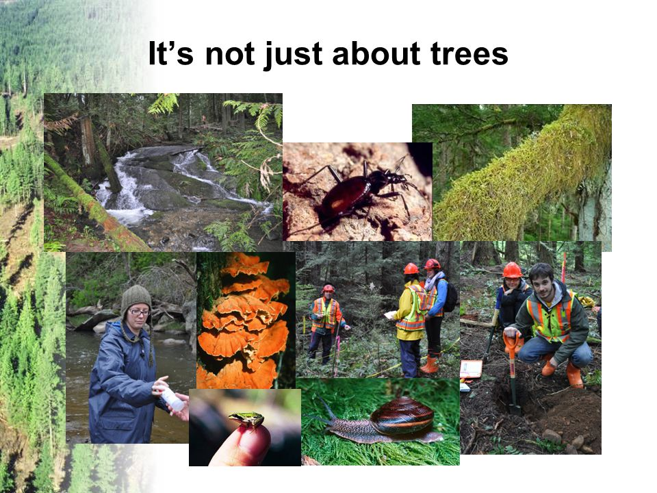 It's not just about trees