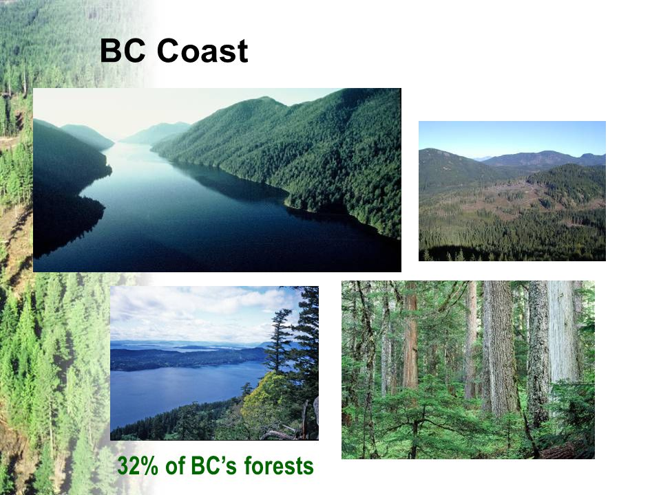 BC Coast 32% of BC's forests