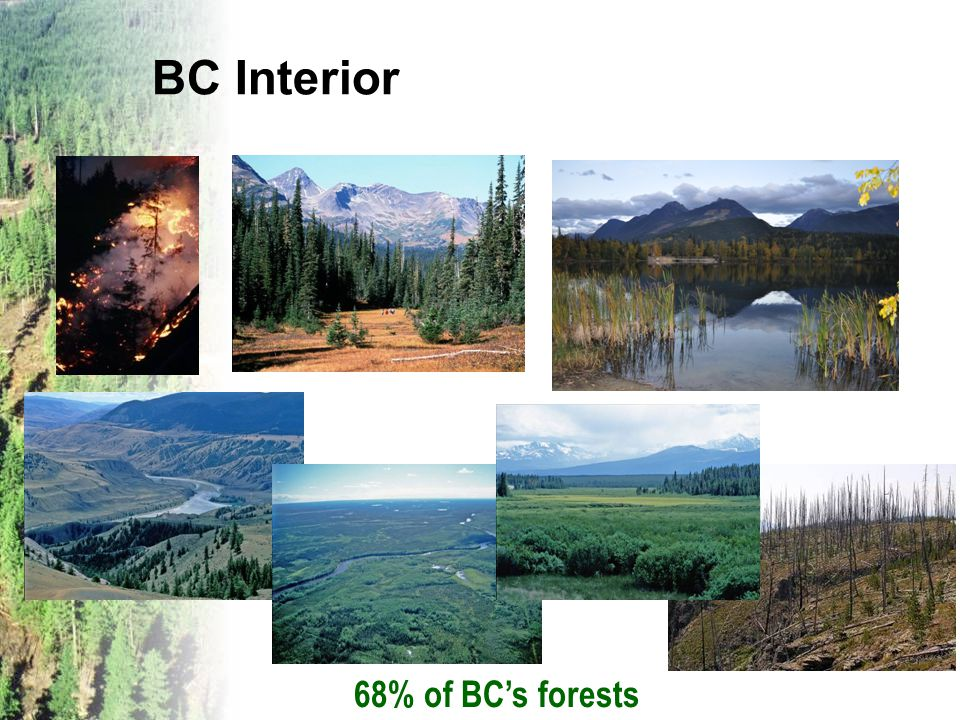 BC Interior 68% of BC's forests