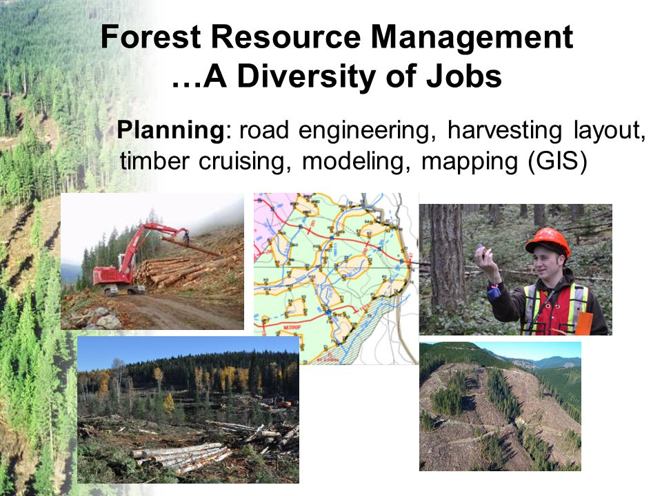 Forest Resource Management …A Diversity of Jobs Planning: road engineering, harvesting layout, timber cruising, modeling, mapping (GIS)