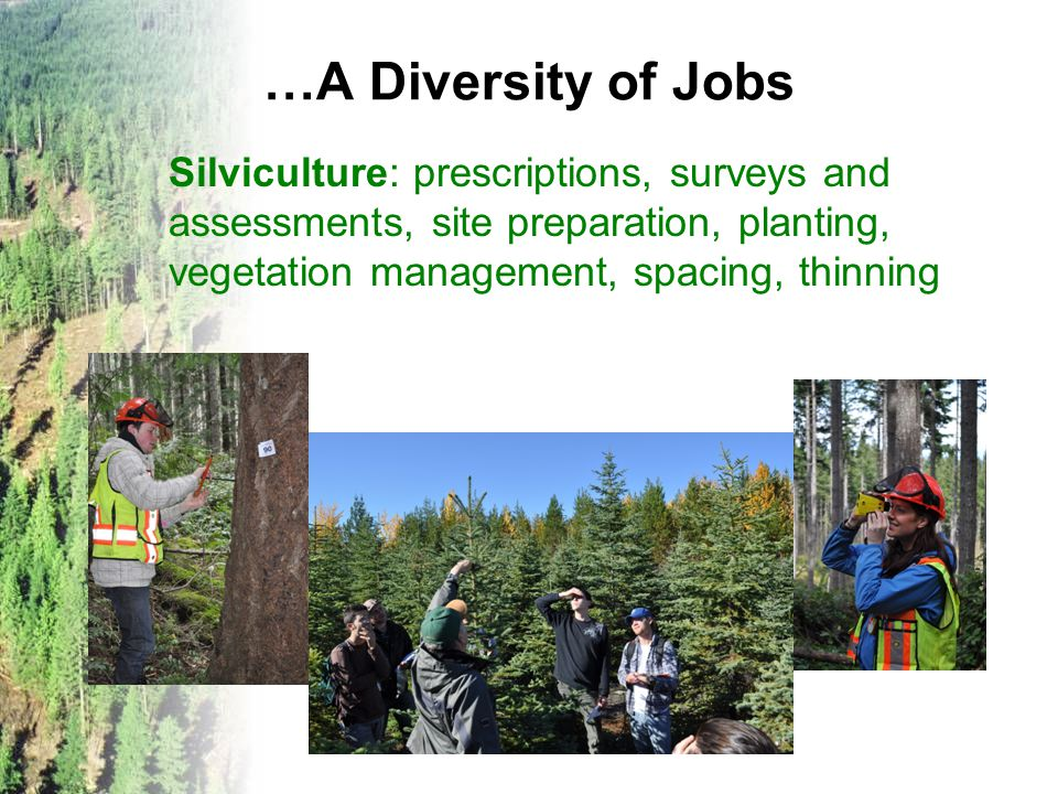 …A Diversity of Jobs Management: supervising crews and contractors, administration, accounting Specialists: research, site classification, forest growth & inventory, genetics, soils, ecology, hydrology (water), fisheries, wildlife, computers...